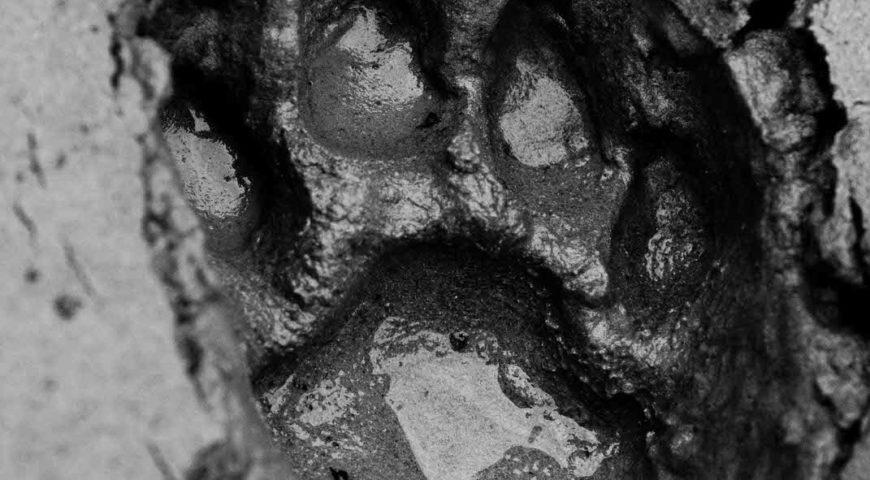 Agua-Negra-footprint