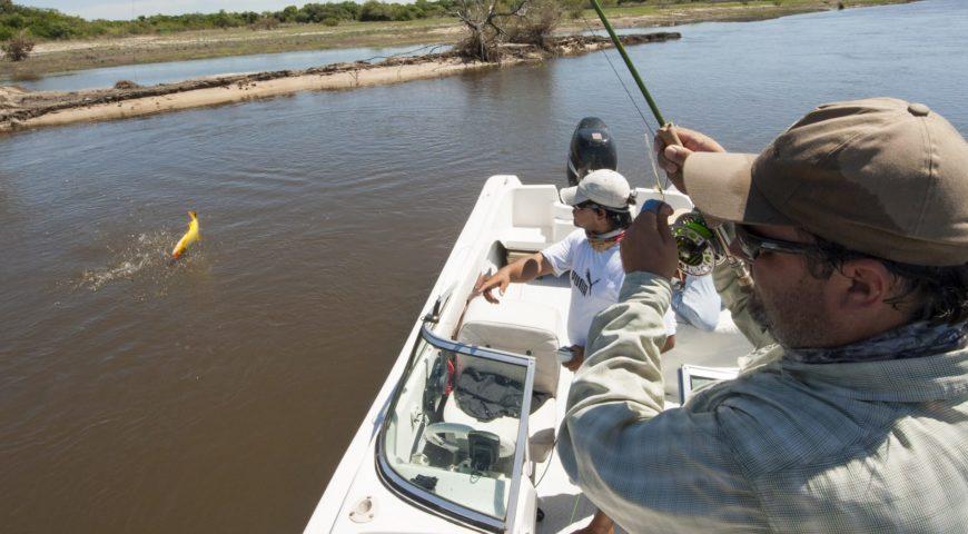 Argentinien-Dorado-Cruiser-Fischen