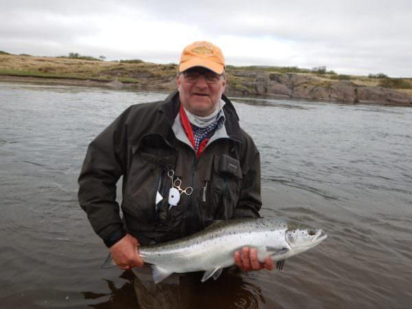 Blanker Juni Lachs aus der Thvera, Island