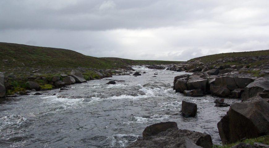 Highlands-Forelle-Char-23