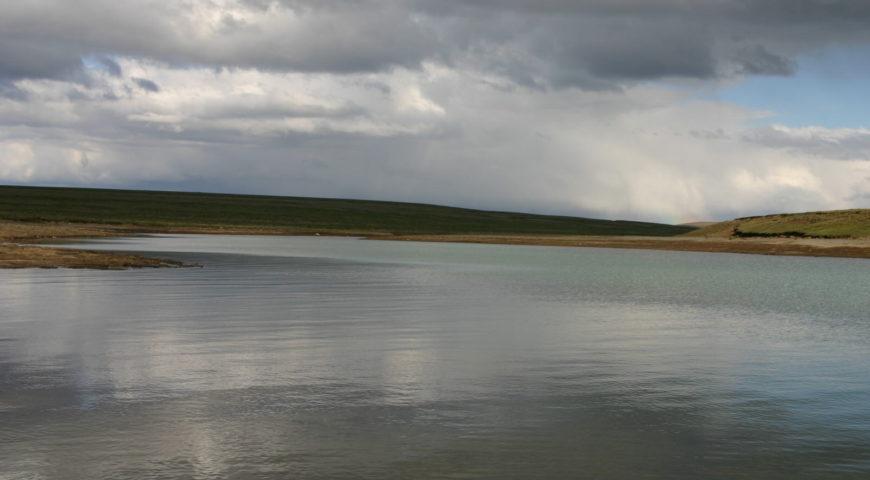 Highlands-Forelle-Char-26