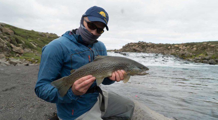 Highlands-Forelle-Char-40
