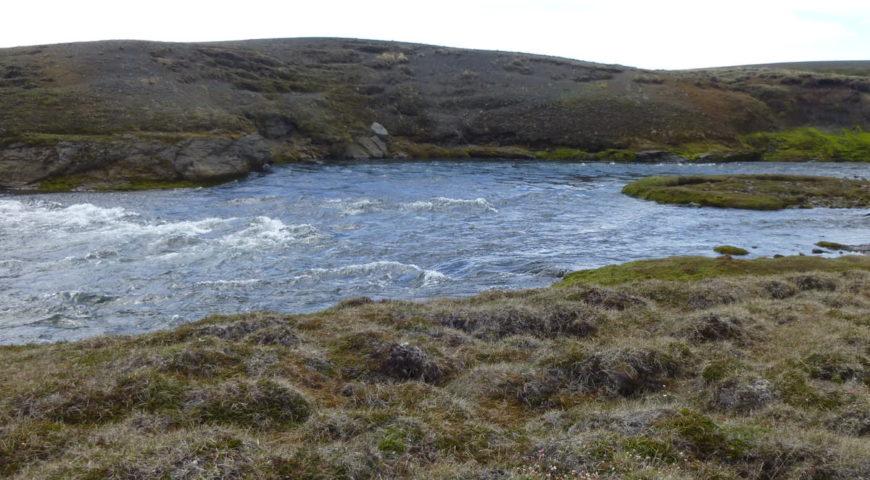 Highlands-Forelle-Char-50