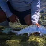 Boenfish