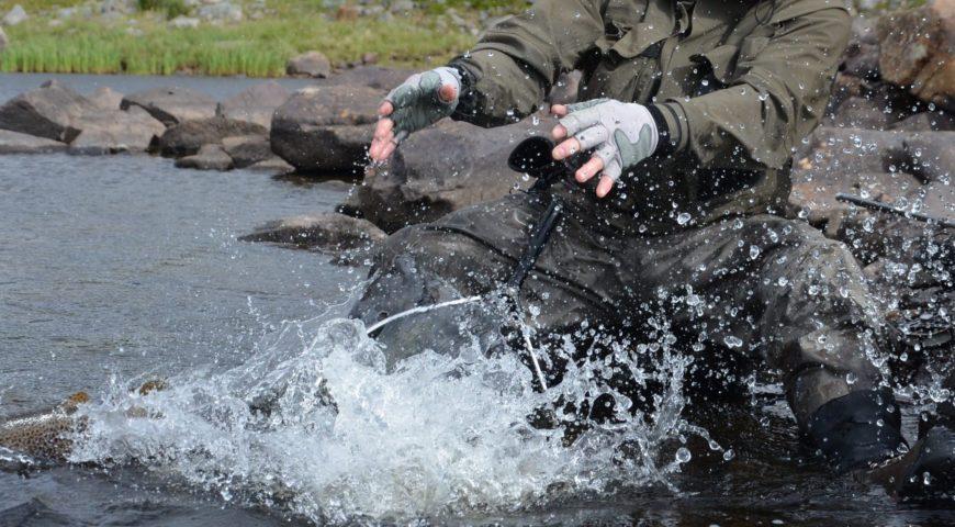 Russland-ASR-Forellen-Bachforelle-Release