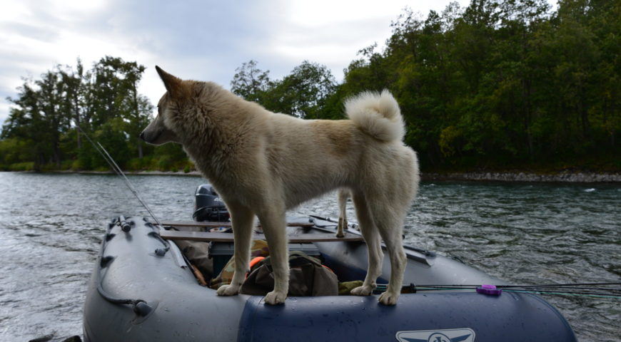 Russland-Kamchatka-Icha-River-Camp-Hund