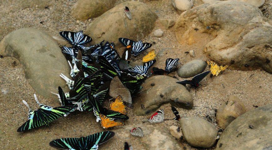 Secure-Schmetterlinge