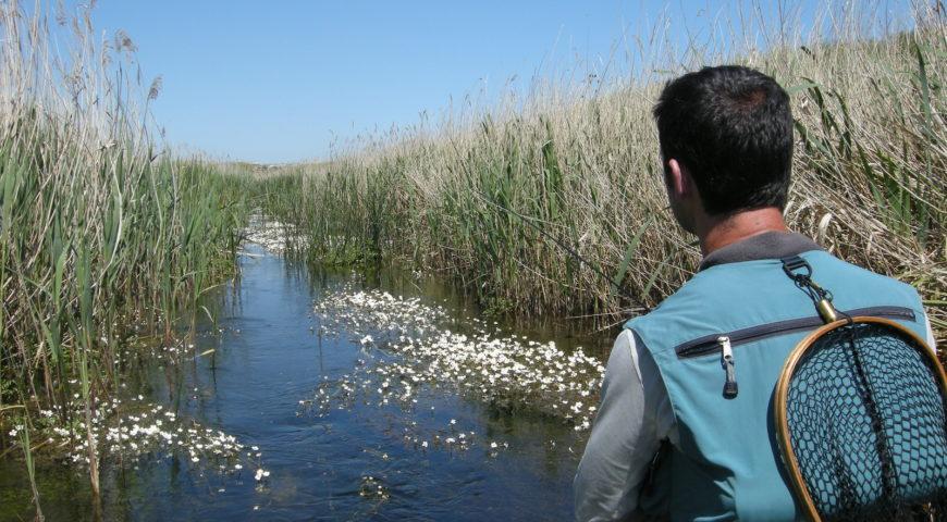 Spanien-Lachs-Forelle-Galerie-Kreidefluss-Kanal