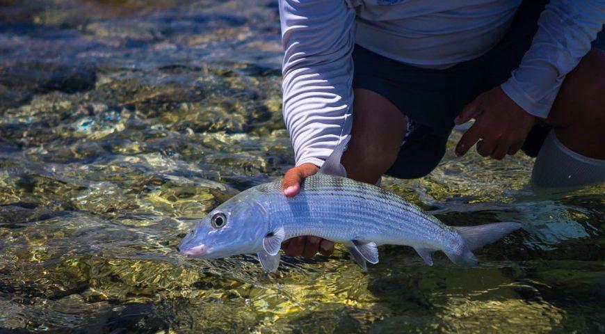Venezuela-Los-Roques-Bonefish