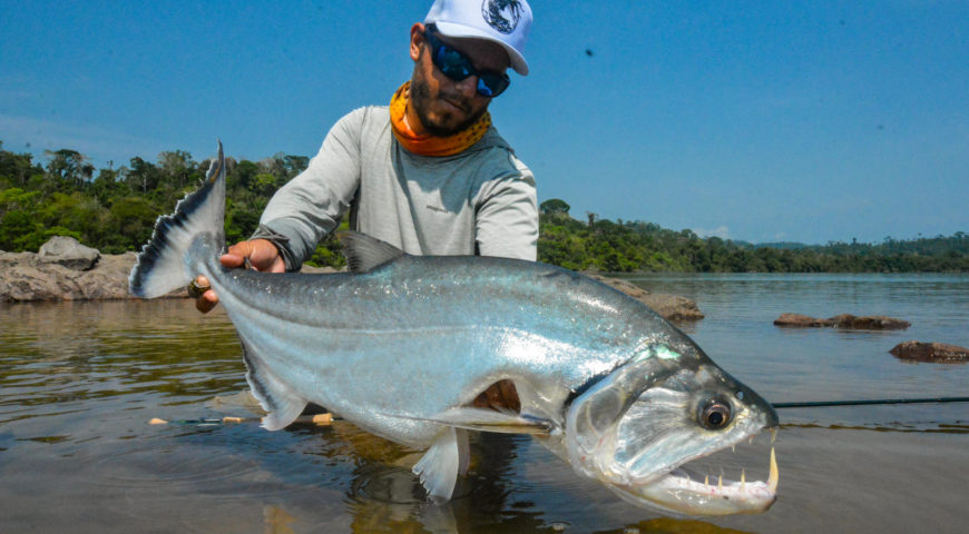 Xingu-Payara-big