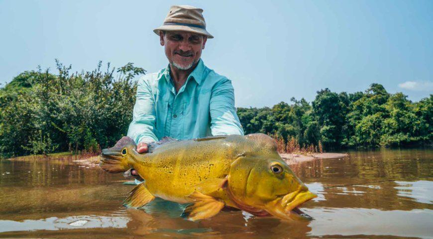 Xingu-Peacock