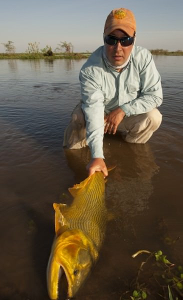 Golden Dorado aus dem Río Paraná, Argentinien